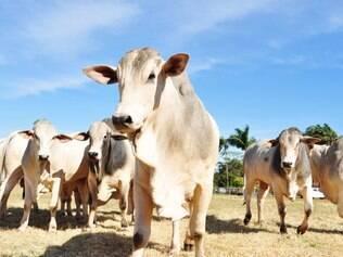 Doença afeta o gado bovino e é conhecida como vaca louca
