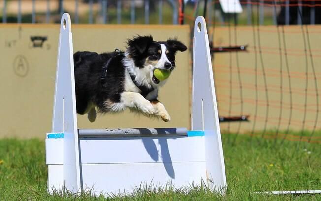 Os exercícios muito exigentes devem ser evitados para não prejudicar a saúde do animal