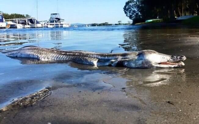 Australiano encontrou bizarra criatura marinha em praia de Nova Gales do Sul