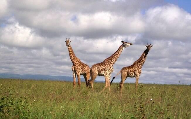 O Quênia ficou em 9º lugar da pesquisa, com 89% dos entrevistados declarando-se religiosos. Na foto, o Parque Nacional de Nairóbi, um dos pontos turísticos.. Foto: Will Knocker/Nairobi National Park