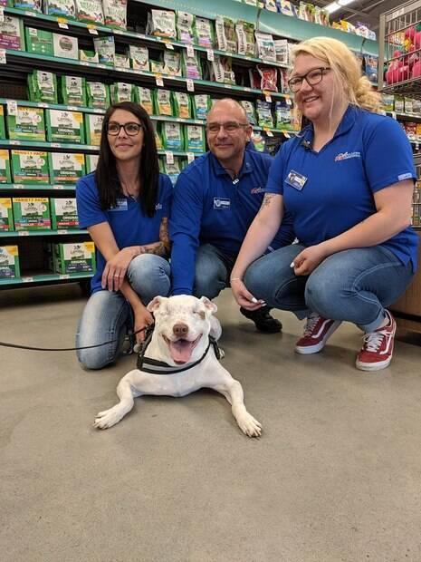 Ollie, o cão cego, e os funcionários da loja