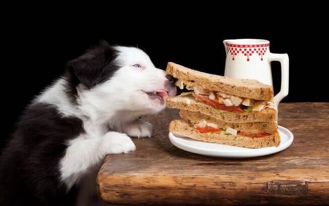 Confira dicas de especialista para melhorar a alimentação do cão
