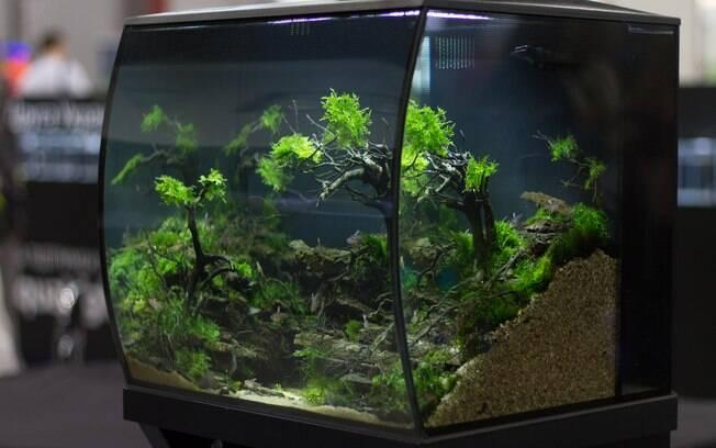 Montar um aquário pode ser mais difícil do que parece. Ele precisa de dedicação, responsabilidade e investimento