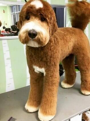 Resultado de imagem para acalmar cachorro durante a tosa