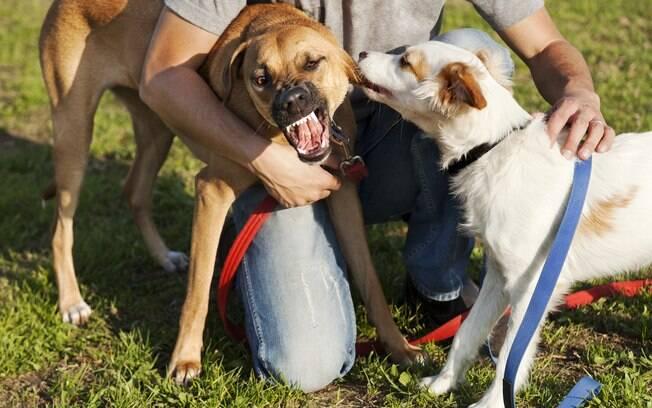 Será muito difícil você segurar o cachorro, mas não desista. Tenha em mente que separar dois ou mais cães brigando não é uma tarefa fácil
