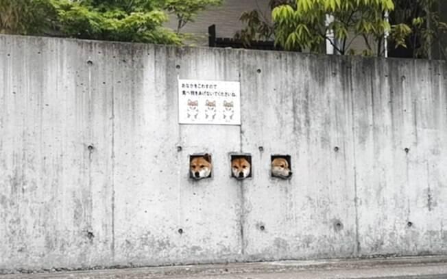 Com três buracos quadrados no muro, os três cachorrinhos estão se tornando uma atração turística inusitada no Japão