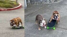 Bulldog obcecado por skate encanta a web dando rolês