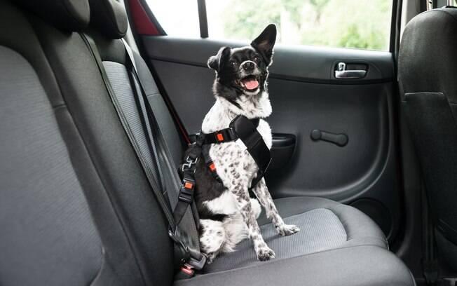 O cachorro deve ir preso por um sinto especial durante a viagem de carro