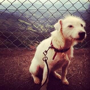 Foto da cachorrinha publicada por Marília Gabriela