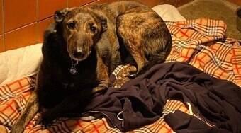 Cão passa o dia abraçado com a blusa de seu dono morto