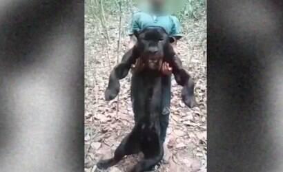 Homem é preso suspeito de matar onça e publicar vídeo