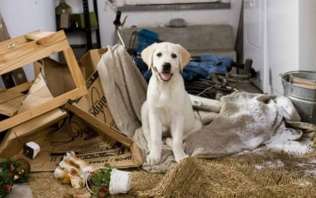Você sabe como preparar sua casa para receber um novo cachorro?