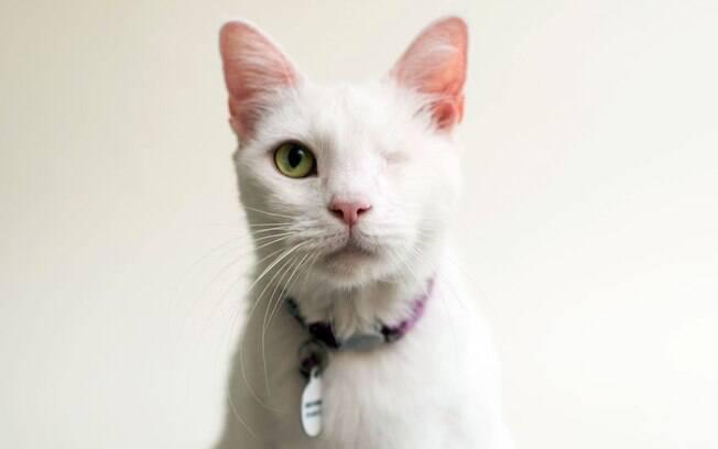Daisy veio de um tutor que acumulava mais de 100 gatos, a maioria deles estavam muito doente.
