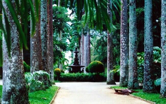 São mais de 10 mil espécies vegetais encontradas no Jardim Botânico do Rio de Janeiro