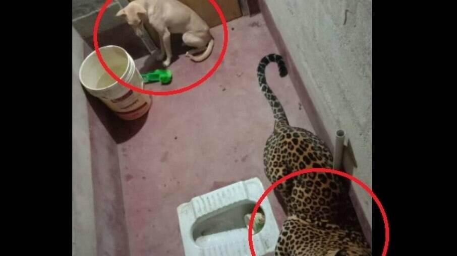 Cachorro e leopardo ficam presos em banheiro durante 7 horas, na Índia