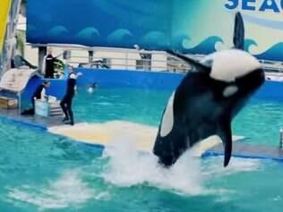 Orca Lolita recebe proteção oficial no aquário de Miami
