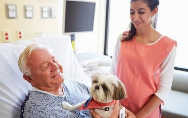 Lei permite que pacientes recebam seus animais de estimação no hospital