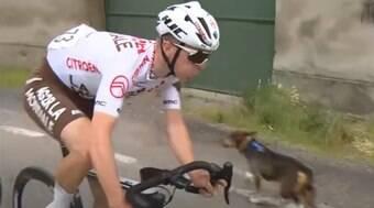 Cachorro provoca acidente em prova de ciclismo na Itália