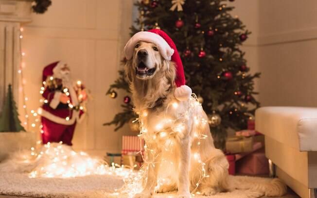 Confira os enfeites de Natal que são perigosos para animais de estimação e mantenha-os fora de alcance