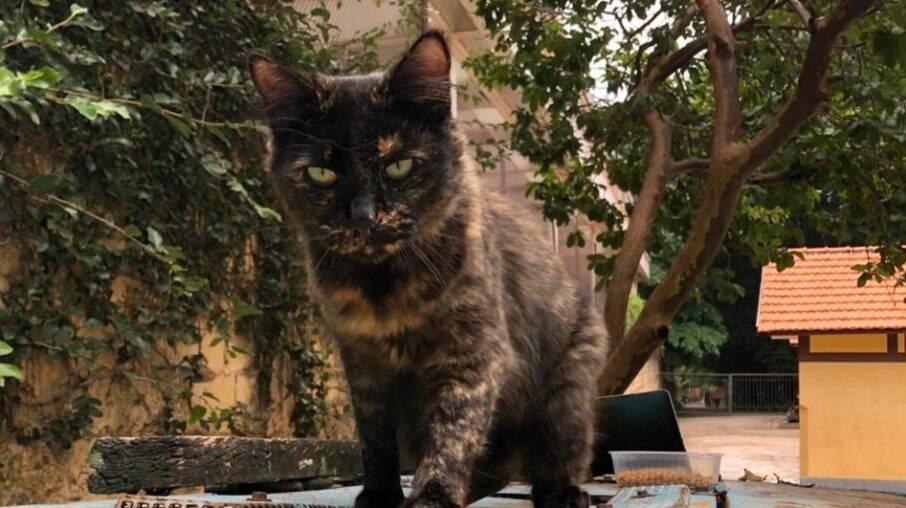 Parque da Zona Oeste tem vários gatos para adoção