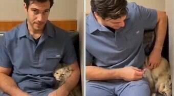 Gatinho só consegue tomar vacina escondido atrás do veterinário