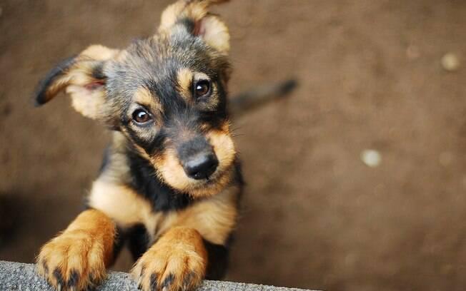 Muitas pessoas querem adotar o cachorro mas não fazem isso por medo