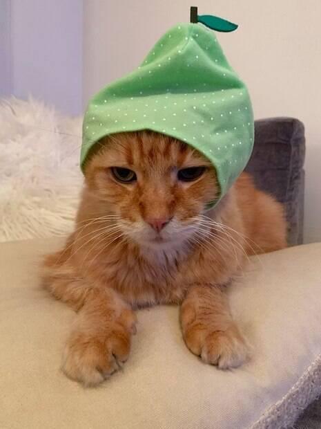 Chapéus para gatos