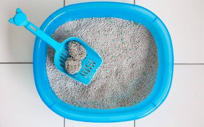 A limpeza superficial da caixa de areia para gatos deve ser feita diariamente