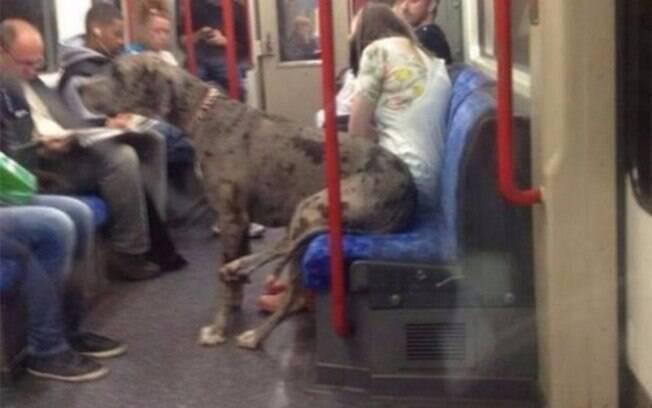 Um cachorro sentado no metrô.