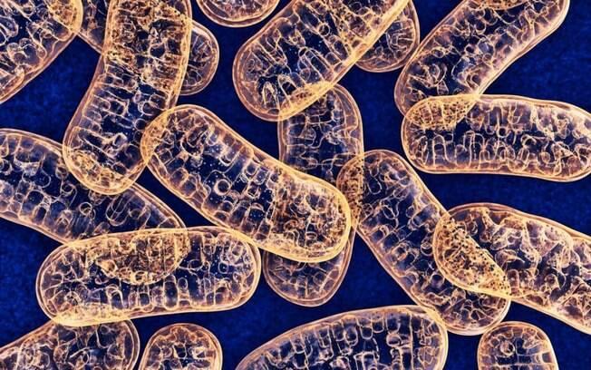Cientistas afirmam que Covid-19 é doença vascular e pode afetar todos os órgãos