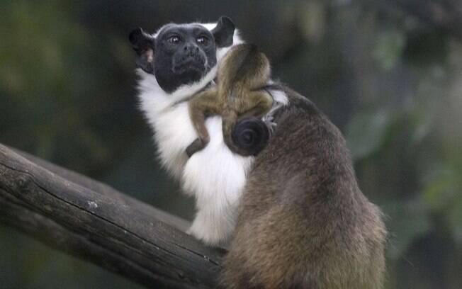 Para dar nome ao filhote, a Fundação Jardim Zoológico de Brasília (FJZB) fez uma campanha em seu Instagram. Resultado sai nos próximos dias