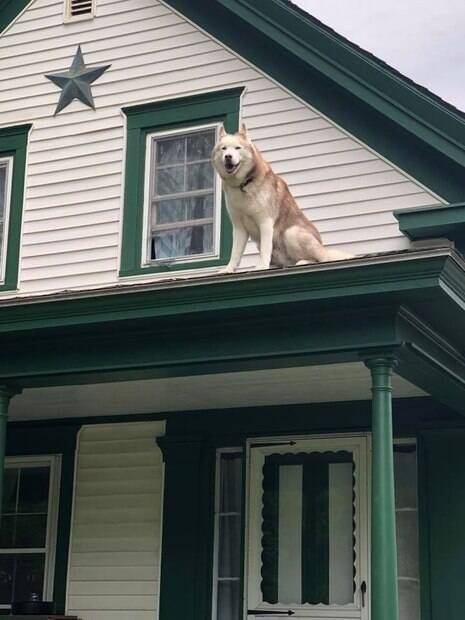 Cão fica preso no telhado da casa e bombeiros precisa resgatá-lo