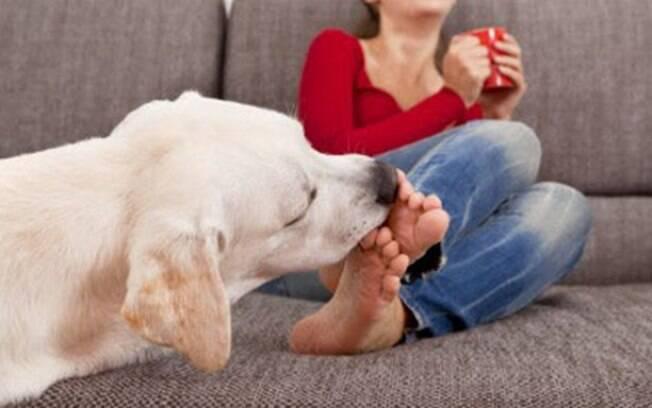 Qual o motivo para os cachorros adorarem lamber pés?