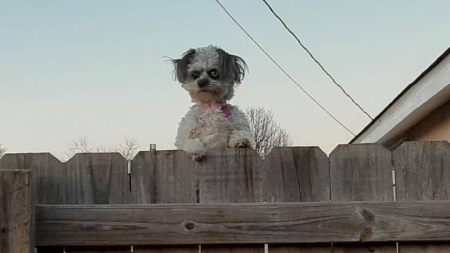Foto de cachorro viraliza por semelhança com personagens do cinema