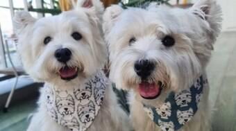 Cachorros de Cingapura se tornam influencers no Instagram