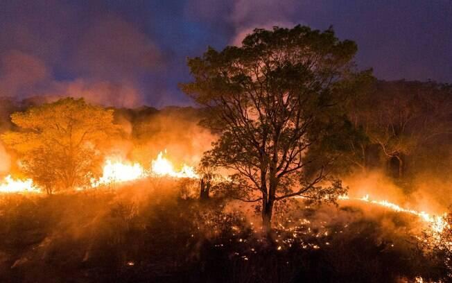 No Pantanal, fogo atinge últimos redutos de onças