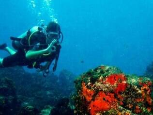Nos Parrachos também dá para mergulhar com cilindro para ver os corais