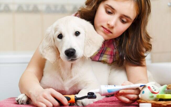 Jamais utilize produtos humanos para escovar os dentes do cão