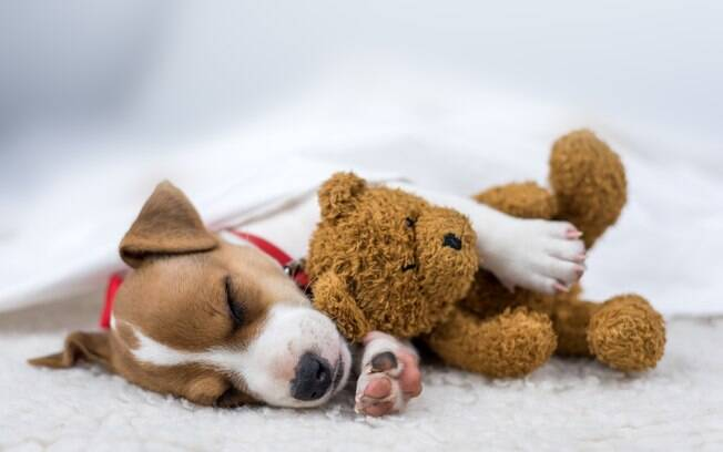 Uma fêmea que sofre de gravidez psicológica canina costuma construir ninhos pela casa e adotar brinquedos, cobertores, pelúcias ou outros objetos como filhos