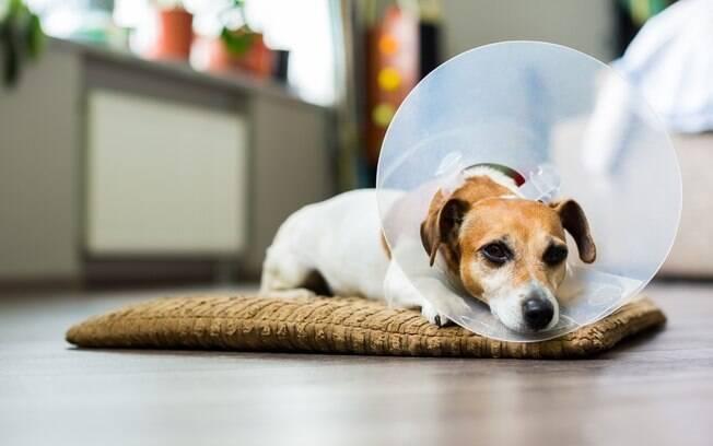 Confira algumas opções de remédio caseiros para tratar feridas em cachorro