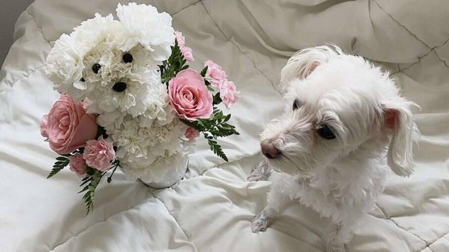 As flores e Ellie, lado a lado