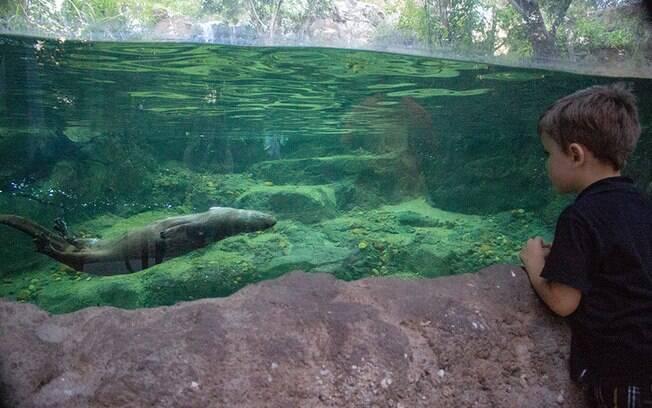 Central Florida Zoo & Botanical Gardens permite que as crianças tenham contato com animais e a natureza