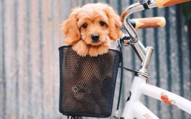 É possível cuidar de um cão mesmo sem muito dinheiro