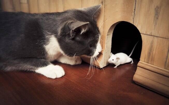 Em vez de ratos e insetos, gato inovou e trouxe saco cheio de drogas ilícitas para casa