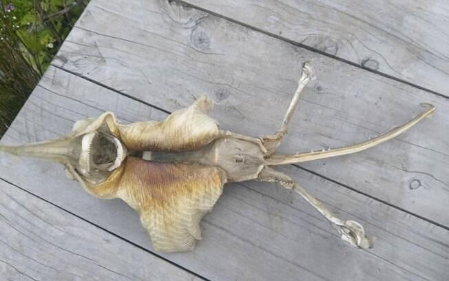 Fóssil 'alienígena' encontrado por Hanna estava na praia; fotos do estranho objeto foram publicadas na internet