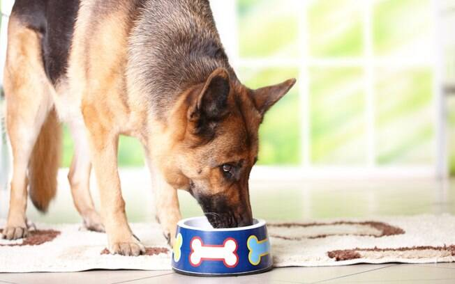 Lembre-se de levar o pet ao veterinário para saber se ele precisa ou não ingerir vitaminas e nunca tomar essa decisão por conta própria