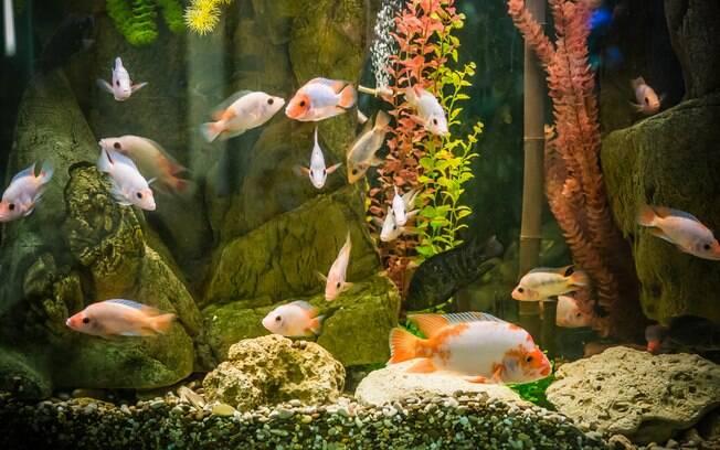 Ao fim da noite, dama de honra acaba tendo que levar para casa mais de 80 peixes que sobraram do casamento