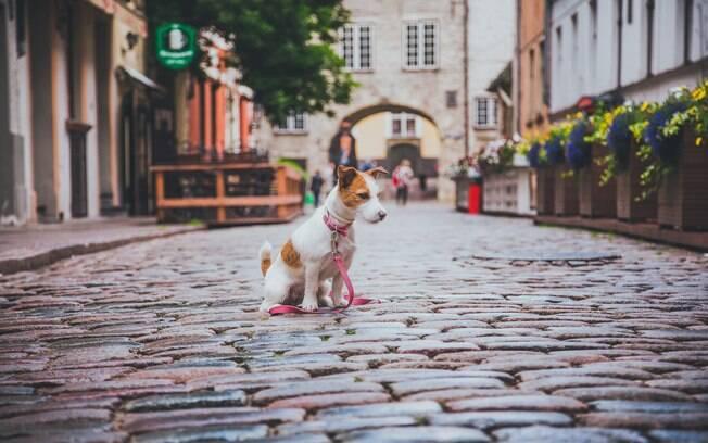 Lisboa é cheio de cafés, parques e jardins ao ar livre que você pode passear com o cão