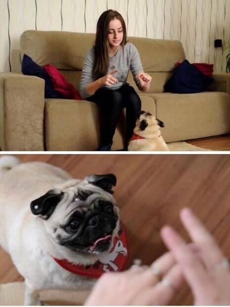cachorro que entende libras