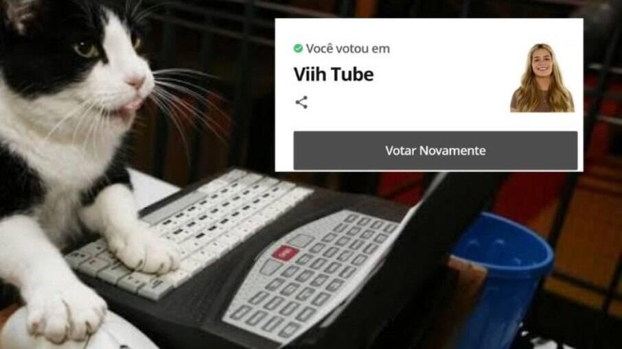 Gatos estão revoltados com Viih Tube